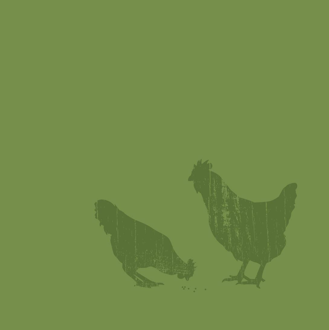 Branding graphic design image of illustrated chickens.