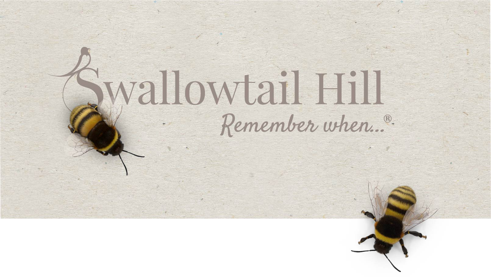 Swallowtail Hill logo design and bumble bees.